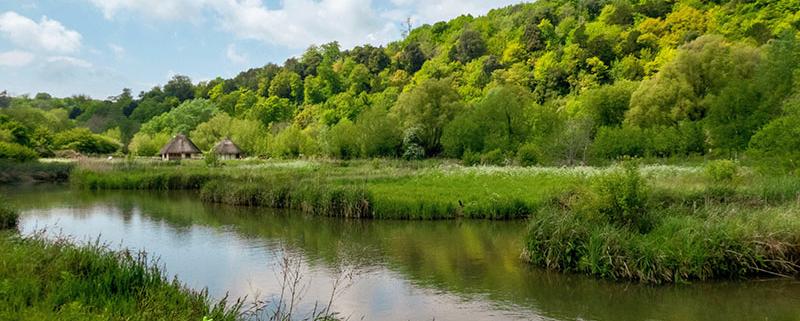 British wetland scene